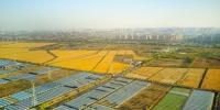 如何展现乡村振兴的江苏作为?三产融合,提升农业竞争力 - 新华报业网