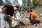 为了庆祝自己的生日,五岁的刘嘉义与爸爸妈妈一起种下一颗小小的桃树苗。 - 江苏新闻网