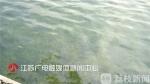南京花巨资整治好的黑臭河 未料10个月后重回原形 - 新浪江苏