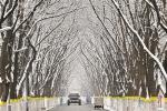 昨天上午,环卫工人在通州堡龙路清除雪水 黑建军 图 - 新浪江苏