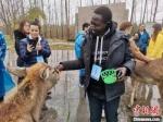 外籍友人与麋鹿亲密接触。 谷华 摄 - 江苏新闻网